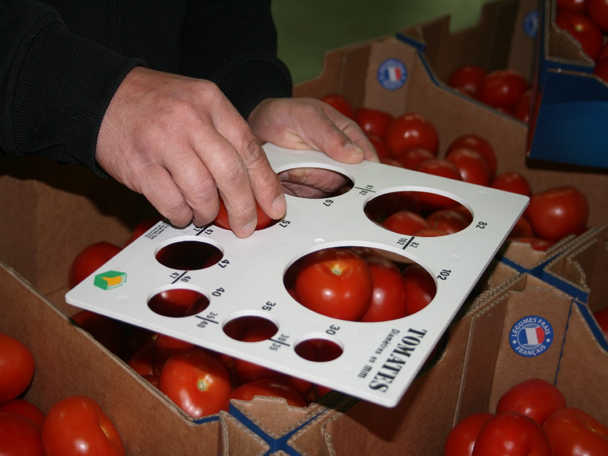 AGREEUR LOGISTIQUE TOMATE 1200X900